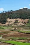 Rice paddies in Madagascar [madagascar_1688]