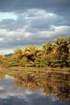 Palms along a canal near Maroantsetra [madagascar_1853]