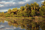 Palms along a canal near Maroantsetra [madagascar_1855]