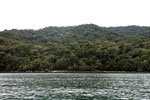 Rainforest on Nosy Mangabe