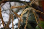Palm flowers