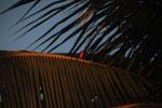 La Rive Droite, Madagascar