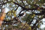 Bird [madagascar_2549]