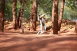 Verreaux's Sifaka dancing [madagascar_2675]