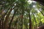 Sifaka forest [madagascar_2769]