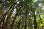 Sifaka forest [madagascar_2770]