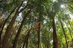 Sifaka forest [madagascar_2771]
