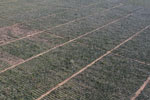 Aerial view of sisal plantation near Amboasary [madagascar_2988]