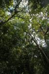 Montagne d'Ambre forest canopy