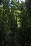 Montagne d'Ambre forest [madagascar_3259]