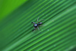 Metallic black spider