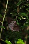 Butterfly [madagascar_3416]