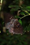 Butterfly [madagascar_3417]