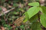 Butterfly [madagascar_3572]