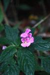 Flower [madagascar_3816]