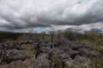 Limestone tsingy [madagascar_3879]