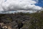Limestone tsingy [madagascar_3883]