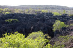 Stone forest [madagascar_4135]