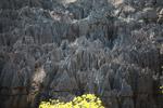 Stone forest [madagascar_4136]
