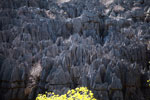 Limestone tsingy [madagascar_4137]