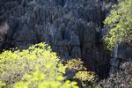 Limestone tsingy [madagascar_4138]