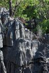 Limestone tsingy [madagascar_4145]