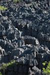 Limestone tsingy [madagascar_4149]