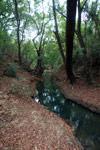 Creek in Ankarana [madagascar_4272]