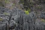 Limestone tsingy [madagascar_4313]
