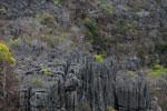 Stone forest [madagascar_4314]