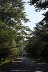 Tree-lined road from Ambanja to Ankify port/jetty