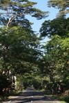 Tree-lined road from Ambanja to Ankify jetty