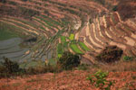 Terraced rice paddies Madagascar's Central Plateau