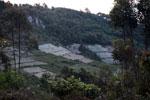 Eucalyptus plantation in Madagascar [madagascar_4819]