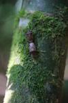 Mating bugs [madagascar_4936]