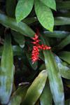 Epiphytes [madagascar_5184]