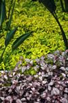 Plants [madagascar_5185]