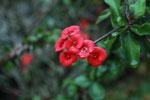 flowers [madagascar_5189]