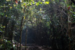 Rainforest path in Ranomafana