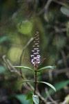 Purple flowers [madagascar_5298]