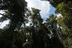 Ranomafana rainforest [madagascar_5477]
