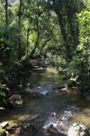 Ranomafana rainforest creek [madagascar_5479]
