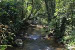 Ranomafana rainforest creek [madagascar_5481]