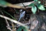 Frog [madagascar_5517]
