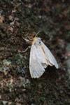 Moth [madagascar_5519]