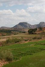 Rice fields near Fianarantsoa [madagascar_5613]