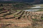 Terraced rice fields near Fianarantsoa [madagascar_5621]