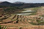 Terraced rice fields near Fianarantsoa [madagascar_5622]