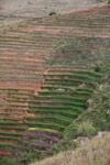 Terraced rice fields near Fianarantsoa [madagascar_5651]