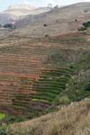 Terraced rice fields near Fianarantsoa [madagascar_5652]